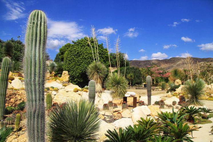 Jardín de Cactus en Níjar - Almería