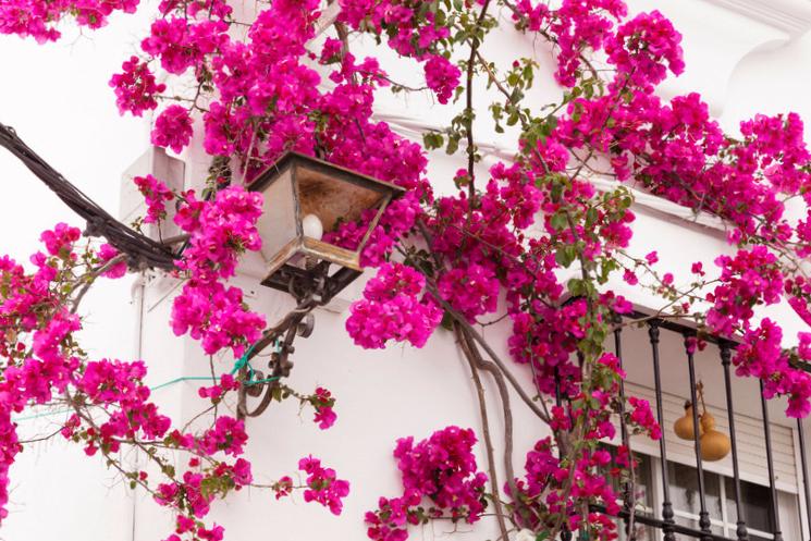 flores Zahara de la Sierra - Cádiz
