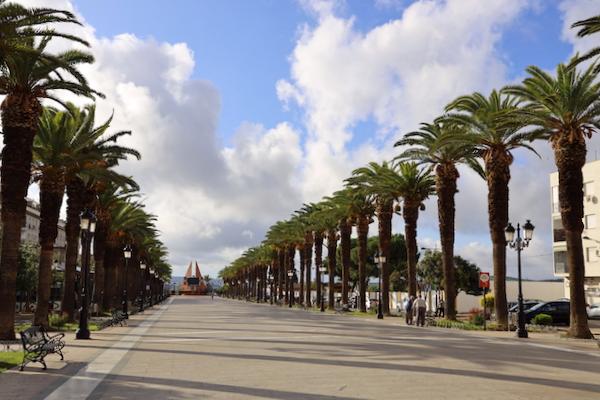 Paseo de las Palmeras Bailén - Jaén