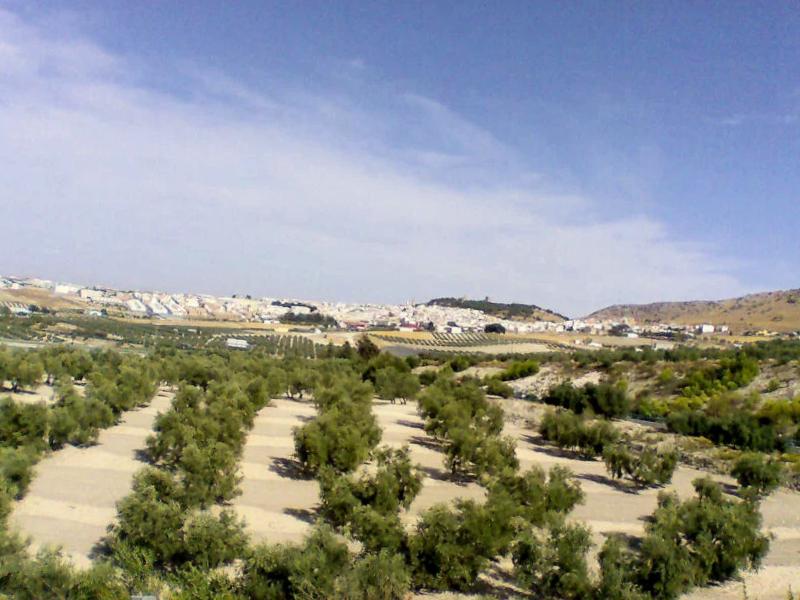 Campos de Estepa - Sevilla